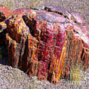 Petrified Wood Closeup Poster
