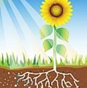 Photosynthesis, Artwork Poster