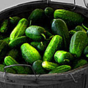Pickling Cucumbers Poster by Ms Judi