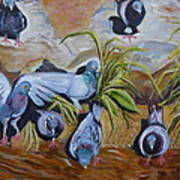 Pigeons At Rancho De Chimayo Poster