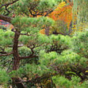 Pine And Autumn Colors In A Japanese Garden II Poster