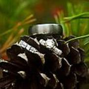 Pine Cone And Wedding Band Poster