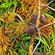 Pine Cones And Needles On A Branch Poster
