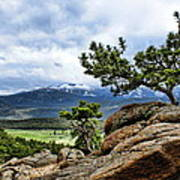Pine Tree And Mountains Poster