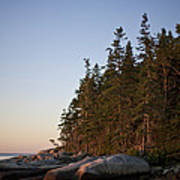 Pine Trees Along The Rocky Coastline Poster by Hannele Lahti