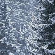 Pine Trees Covered In Snow, Les Arcs Poster