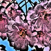 Pink Cherry - Black On Blue Poster by Jen White