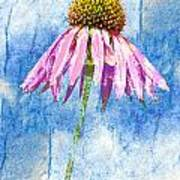 Pink Coneflower On Blue Poster
