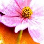 Pink Cosmos On Orange Poster