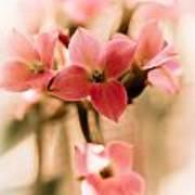 Pink Floral 1 Poster