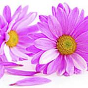 Pink Flowers Poster by Elena Elisseeva