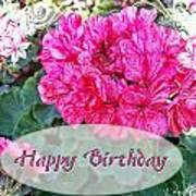 Pink Geranium Greeting Card Birthday Poster
