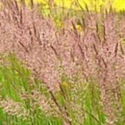 Pink Grass Poster