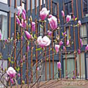 Pink Magnolia. Square Format Poster