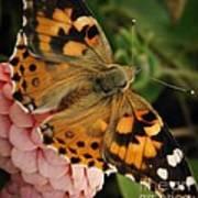 Pink N Orange Poster