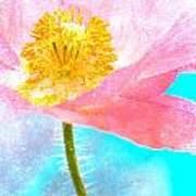 Pink Poppy On Blue Poster