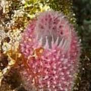 Pink Sponge Poster