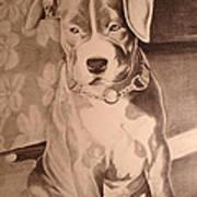 Pitty Pet Portrait Poster by Yvonne Scott