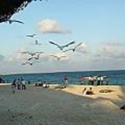 Playing In Playa Poster