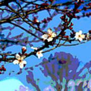 Plum Tree Blossom Poster