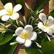 Plumeria Poster by Anne Wertheim