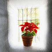 Poinsettia In Window Light Poster