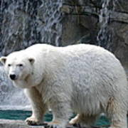 Polar Bear 2 Poster