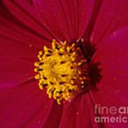 Pollen Dust Poster