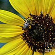 Pollen Laden  Poster
