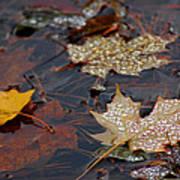 Pond Leaf Dew Drops Poster by LeeAnn McLaneGoetz McLaneGoetzStudioLLCcom
