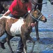 Pony Handler On Assateague Poster