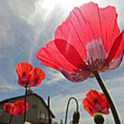 Poppies And Sky Poster
