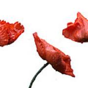 Poppies On White Poster