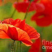 Poppy Love 2 Poster