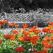 Poppy Seed Bench Poster