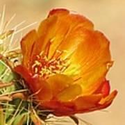 Portrait Of A Cactus Flower Poster