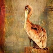 Portrait Of A Pelican Poster