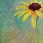 Portrait Of A Sunflower Poster
