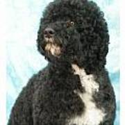 Portugese Water Dog 418 Poster