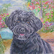 Portuguese Water Dog Poster