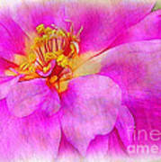 Portulaca With Texture Poster