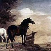 Potter: Horses, 1649 Poster