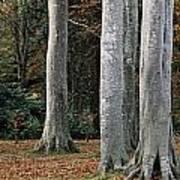 Powerscourt Woods,co Poster