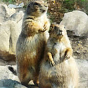 Prairie Dog Formal Portrait Poster