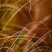 Prairie Grasses Number 4 Poster