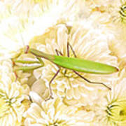 Praying Mantis On A Flower Boquet Poster