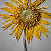 Pressed Sunshine Flower Poster