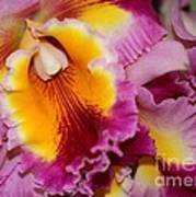Pretty And Colorful Orchids Poster