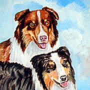 Pretty Pair - Australian Shepherd Poster by Lyn Cook