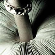 Pretty Petticoat Poster